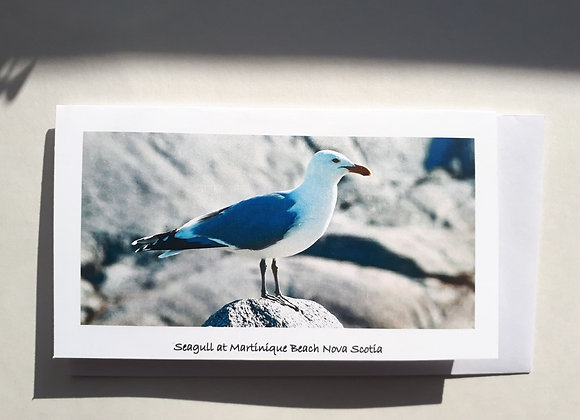 Blank Card with Nature Photography-Seagull