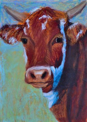 Cow Gaze