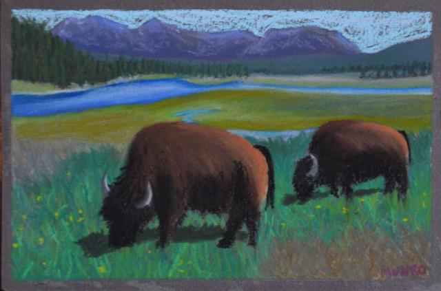 Grazing in Yellowstone