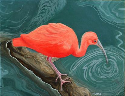 Scarlet Ibis (sold)