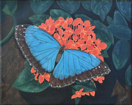 Blue Morpho (sold)