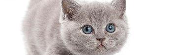 CAT.jpg