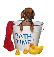 BathTime_clipped_rev_1.png