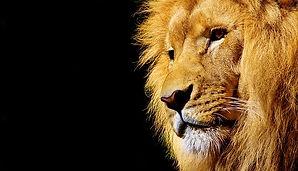 lion-2327225_640.jpg