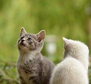 cat-2273598_640.jpg