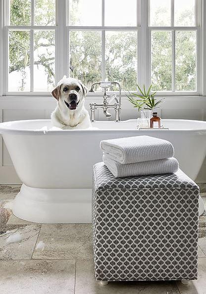 DOG IN BATH.JPG