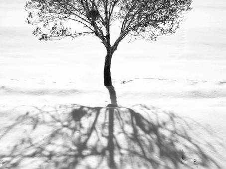 Through the Branches of the Tree: A Metaphysical Trip through Abbas Kiarostami's World
