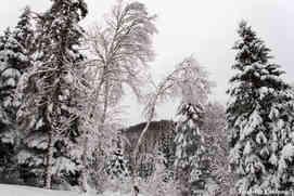La forêt et les arbres autour du Chalet le Malard
