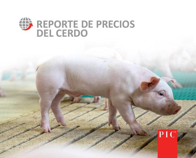 Reporte de Precios del Cerdo LatAm, Semana 52.