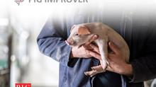 Pig Improver