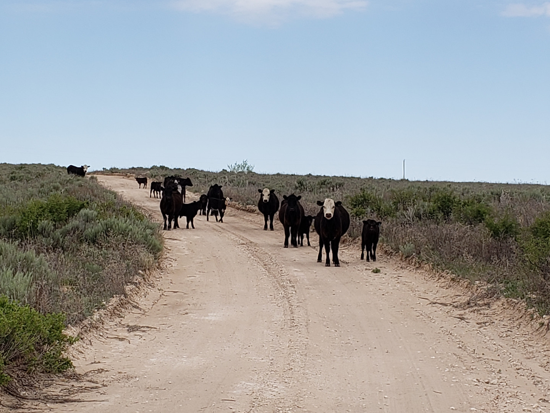 Sneed-Pool Cattle herd 2020