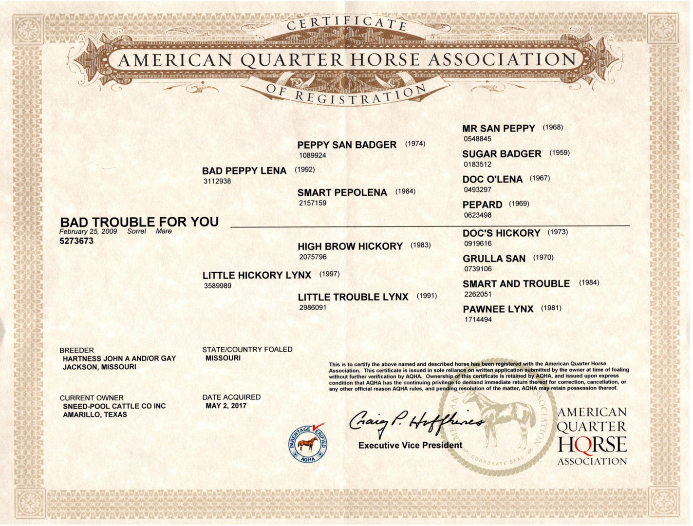 Bad Trouble For You AQHA certificate_