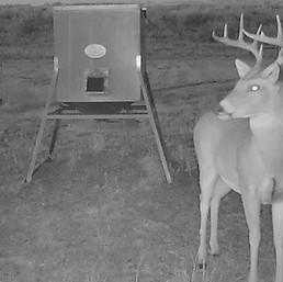 Sneed-Pool Wildlife Buck