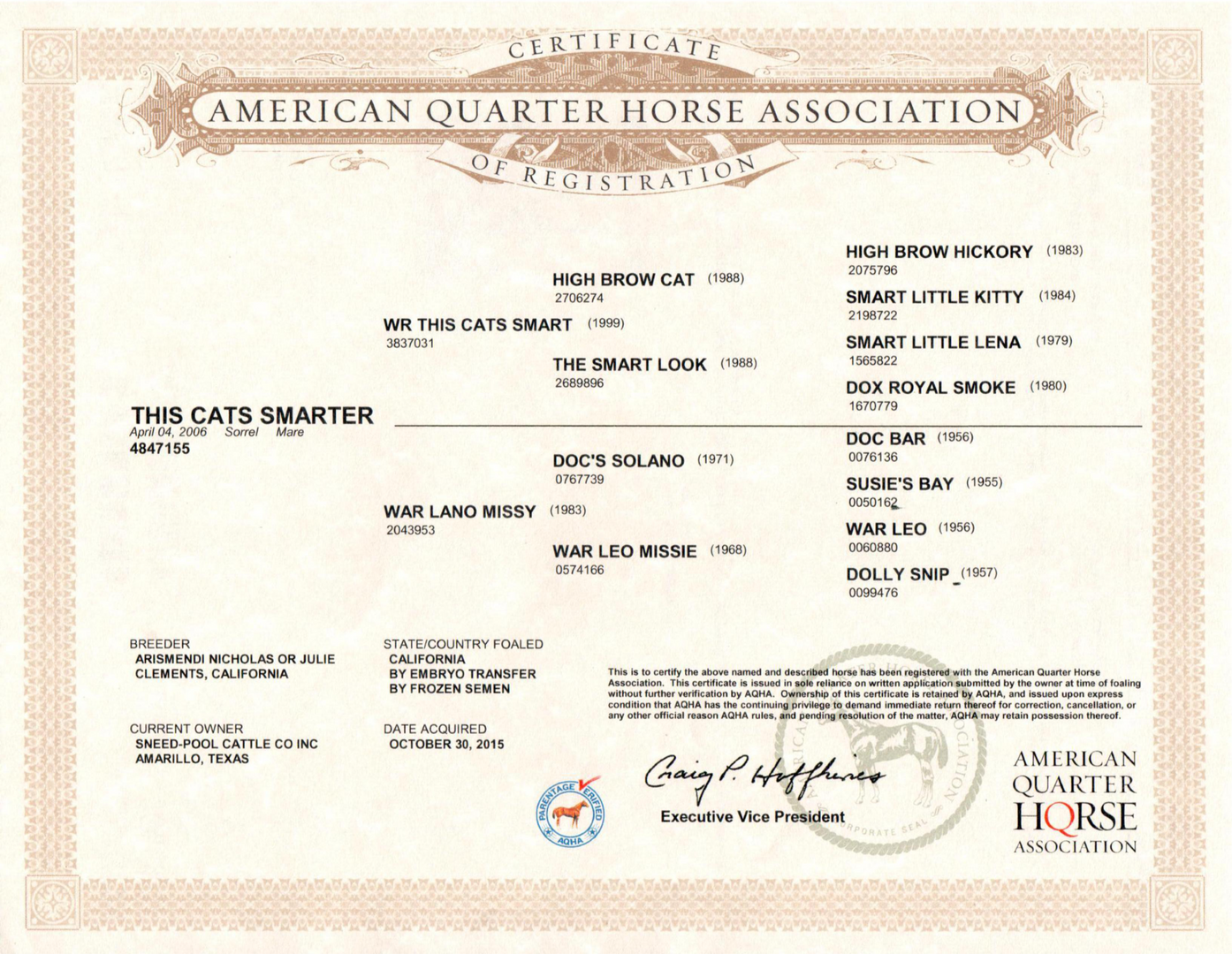 This Cats Smarter AQHA Certificate