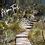 Thumbnail: The Alpine Trail