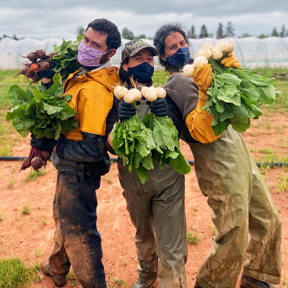 organic farming prince edward island dream team