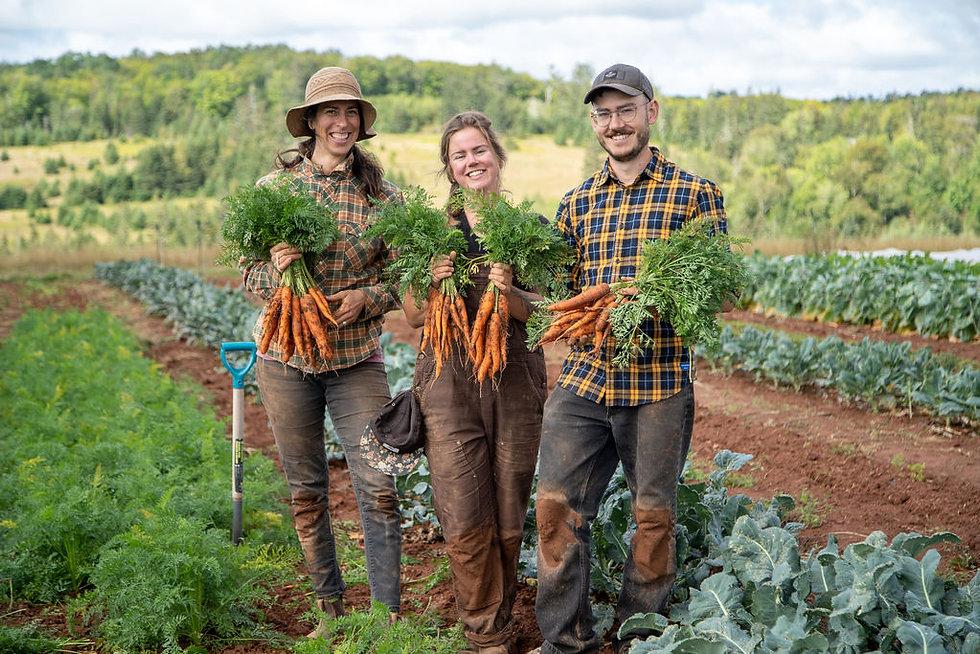 Farmers Organic Carrots PEI Prince Edward Island Farming