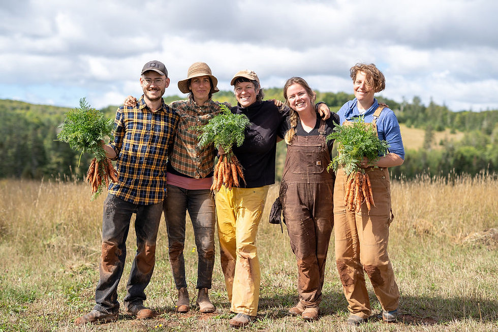 organic farm crew carrots PEI