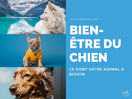 Bien-être du chien : Ce dont votre animal a besoin