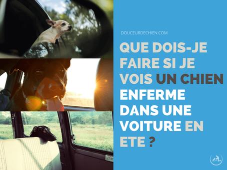 Que dois-je faire si je vois un chien enfermé dans une voiture en été?