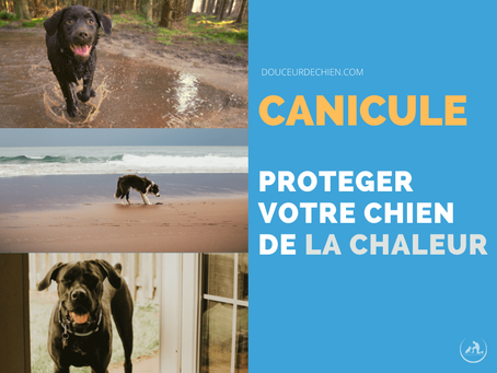 Canicule: Protéger votre chien de la chaleur