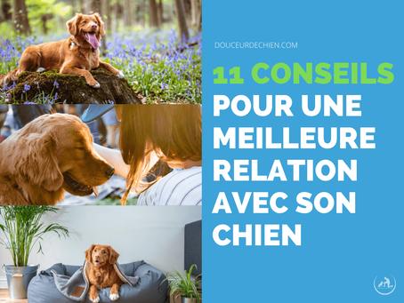 11 Conseils pour une meilleure relation avec son chien