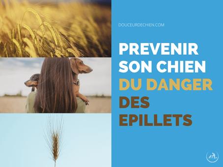 Prévenir son chien du danger des épillets