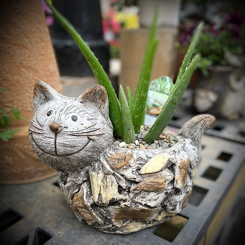 Cat Planter with Aloe