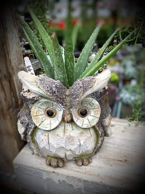 Owl Planter with Aloe