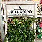 Blackbird Home Goods