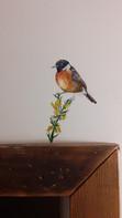 Stonechat bird_The Bath Hotel_Elizabeth