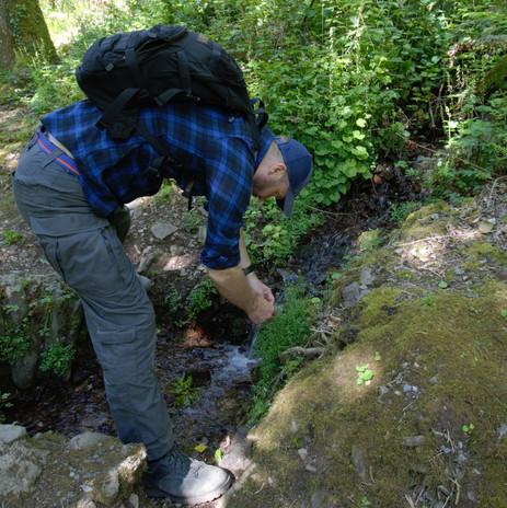 wild garlic forage Heddons Gate(12) .jpg