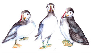 puffin parade in watercolour_edited_with