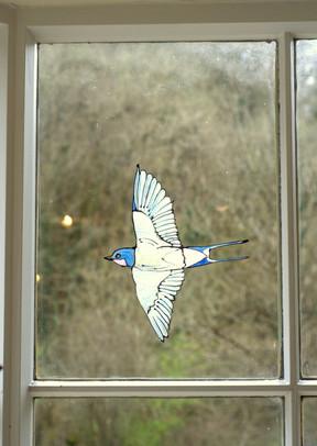 swallow window bird National Trust Heddo