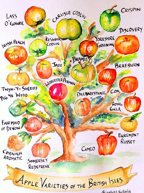 Apple Varieties of the UK A4 print