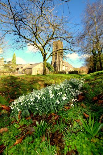 barton farm church snow drops Moor Wild