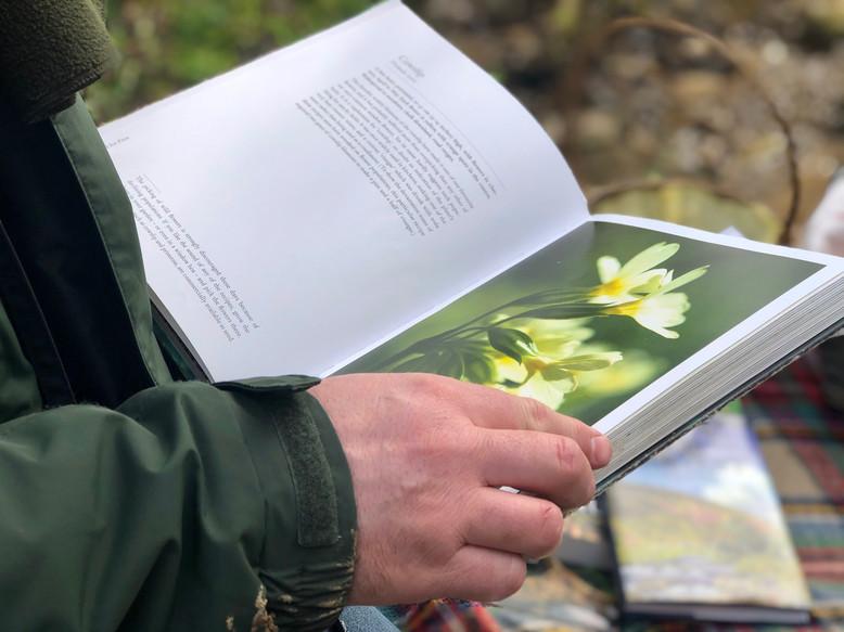 Intro to Wild Foraging primrose book Jas