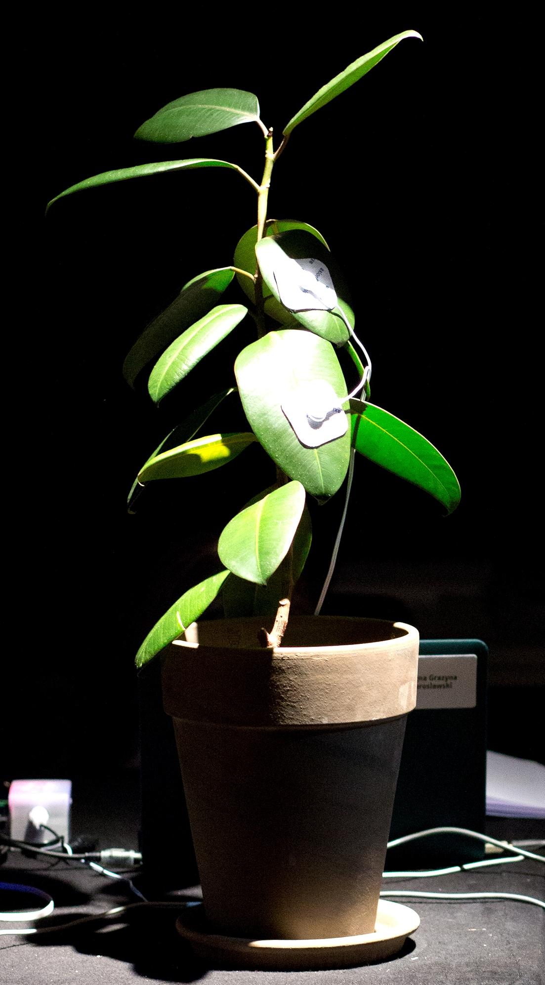 Flora - Die singende Pflanze