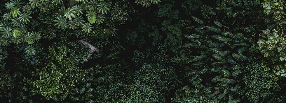 jungle_plane.jpg