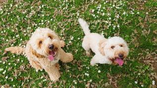 hampshire-dog-walks-near-me