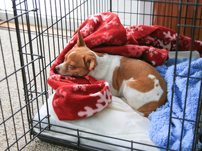 How To Train Your Dog To Love Spending Time In Their Crate?
