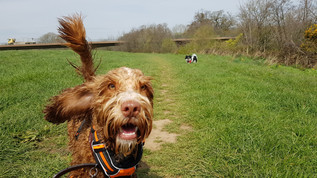 day-care-for-dogs-near-me-aldershot-hampshire