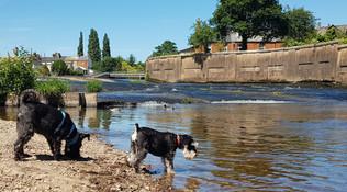 dog-walking-aldershot-hampshire