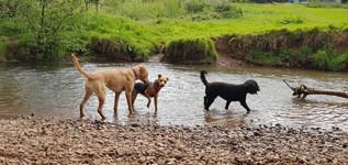 pets-at-home-farnborough-hampshire