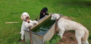 aldershot-dog-boarding-and-dog-sitting