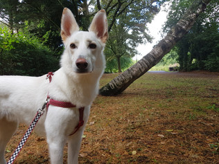 insured-dog-walkers-hampshire