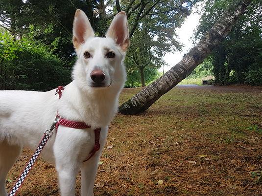 insured dog walker of Farnborough