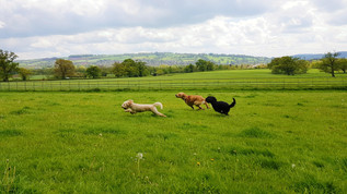 dog-park-for-dogboarding-in-aldershot-farnborough-hampshire