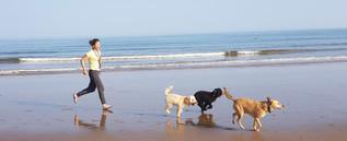aldershot-dog-sitter