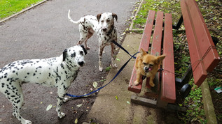 day-care-for-dogs-near-me-fleet-and-camberley